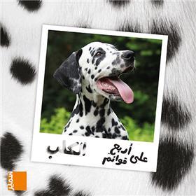 Le chien (arabe)