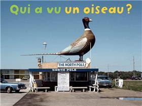 Qui A Vu Un Oiseau ?